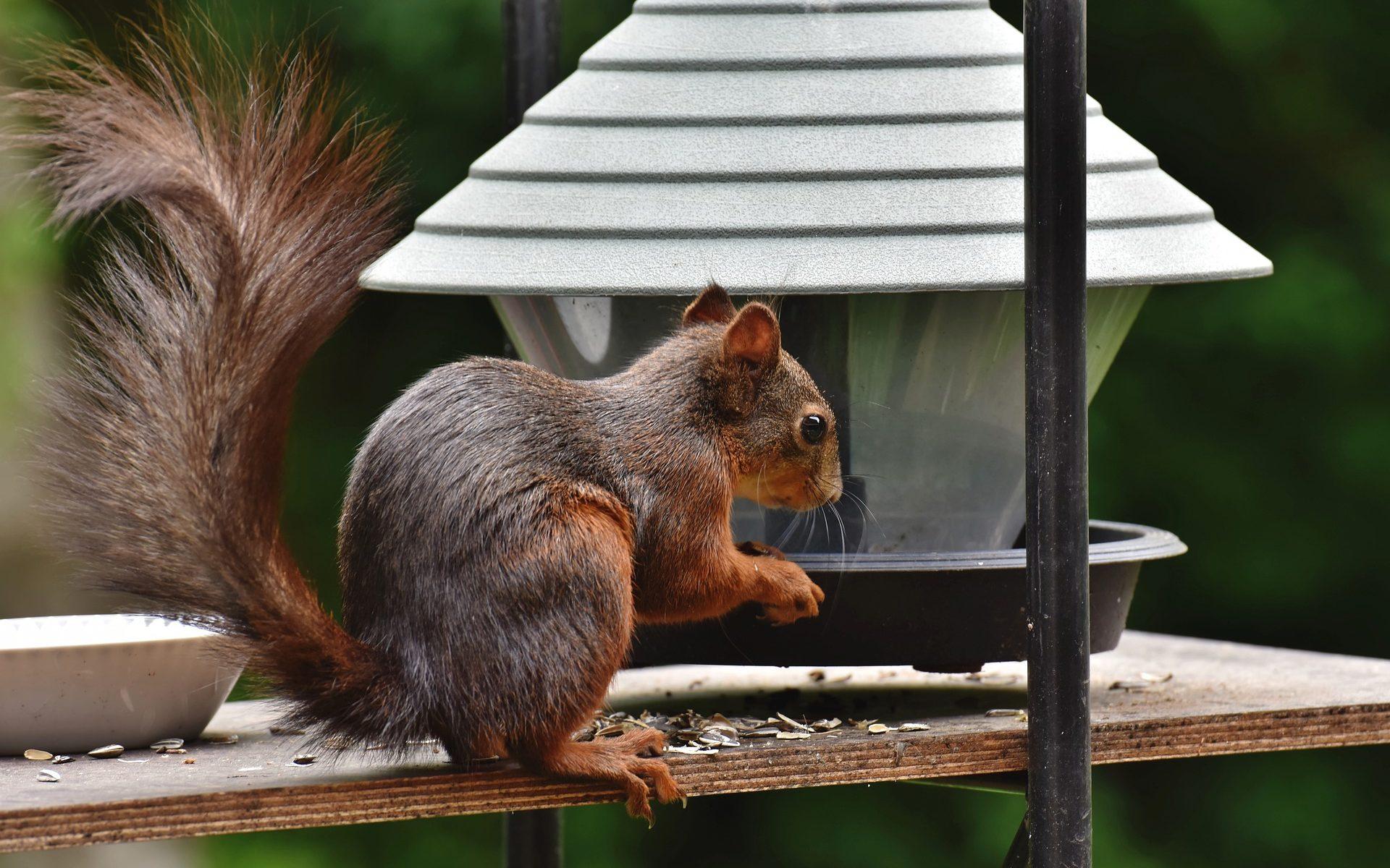 squirrel effectiveness